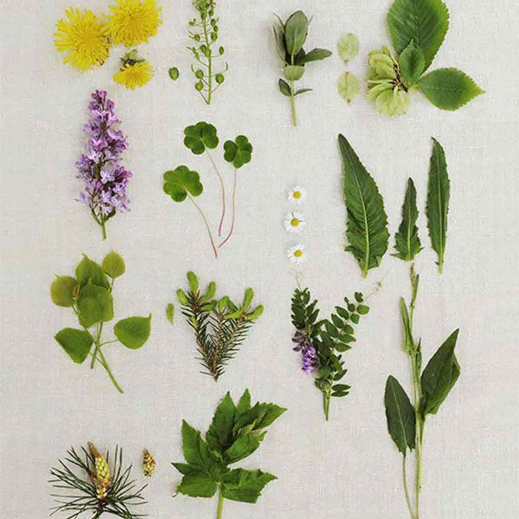 Norrvikens vilda växtskafferi