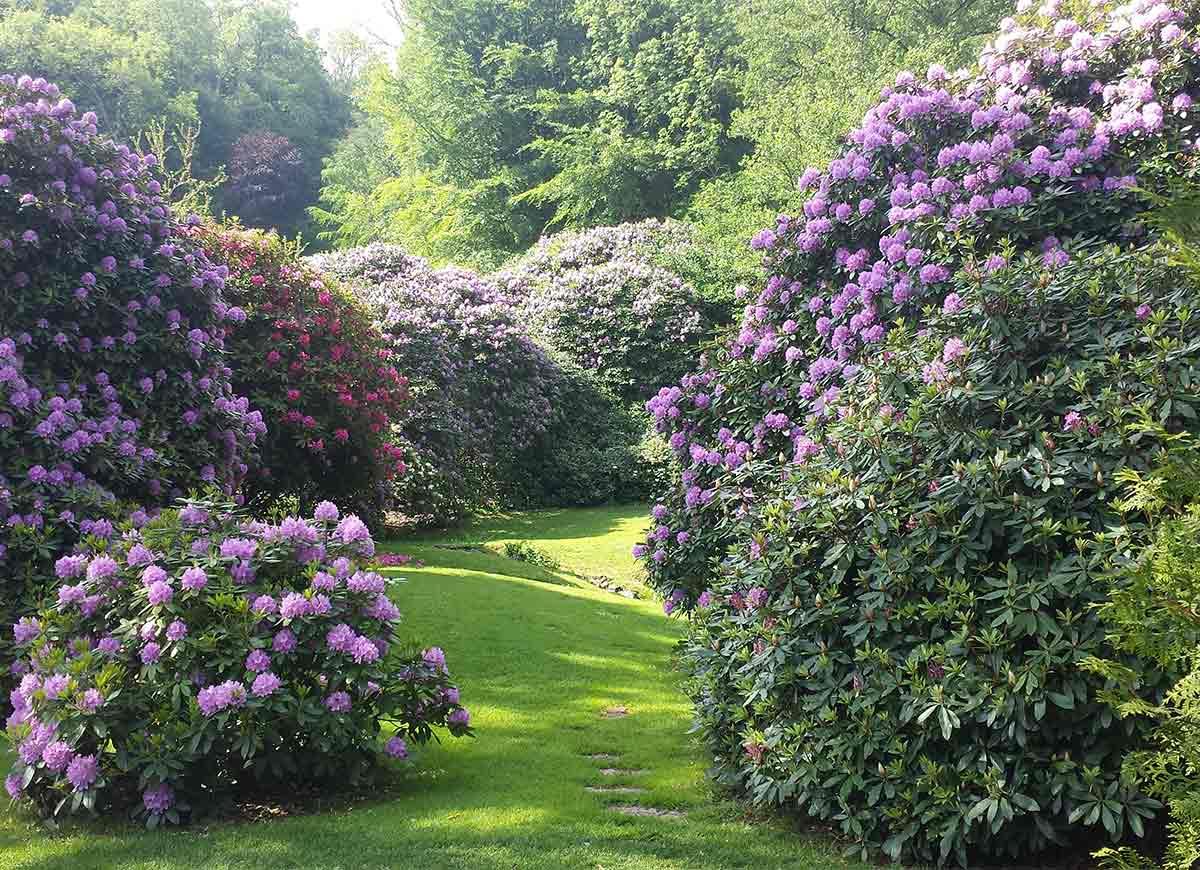 Trädgårdskalender