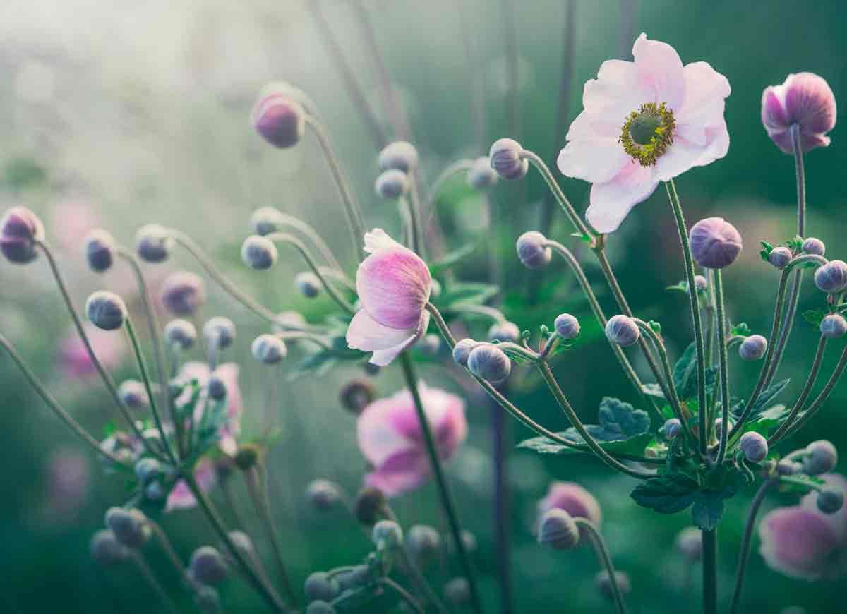 Blomstervandring – nytt i år!