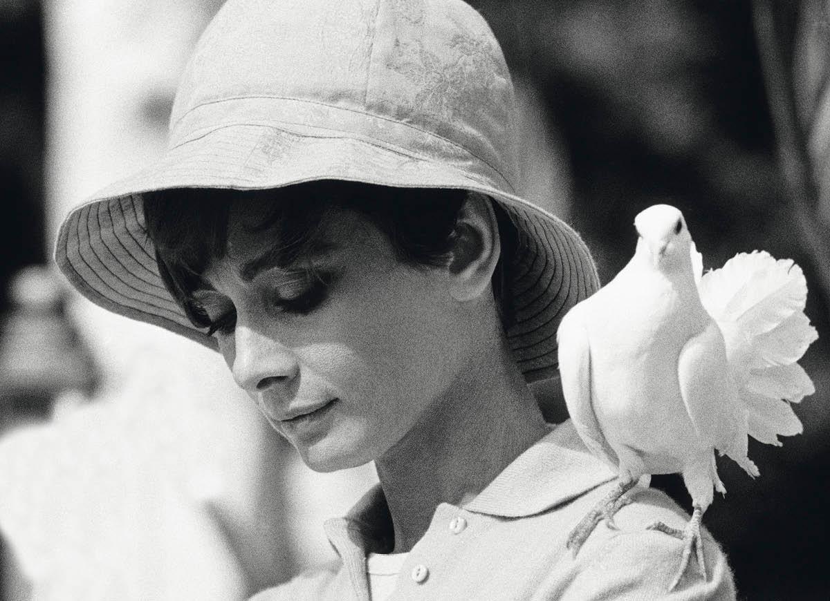 Always Audrey