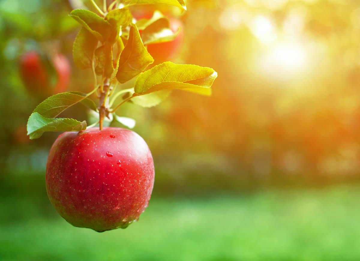Fruktbestämning