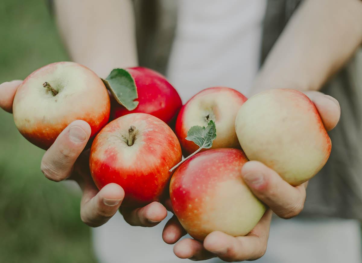 Föreläsning – Hur man historiskt odlat äpplen