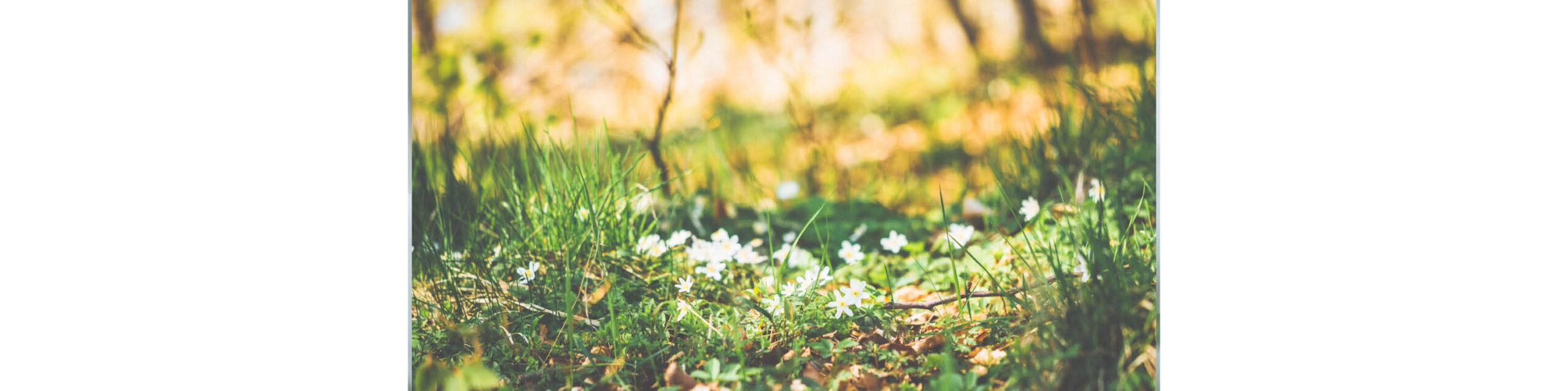 Vårpromenad och skogsslinga  <br> för hela familjen