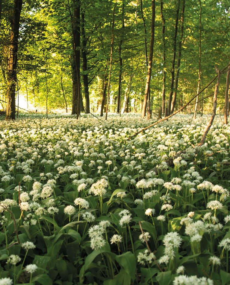 Ett vilt skafferi i skogen och köksträdgården