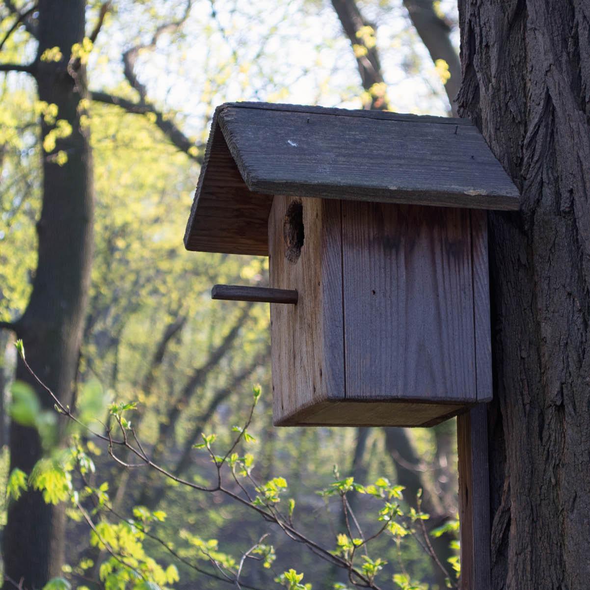 Boplats åt fåglar