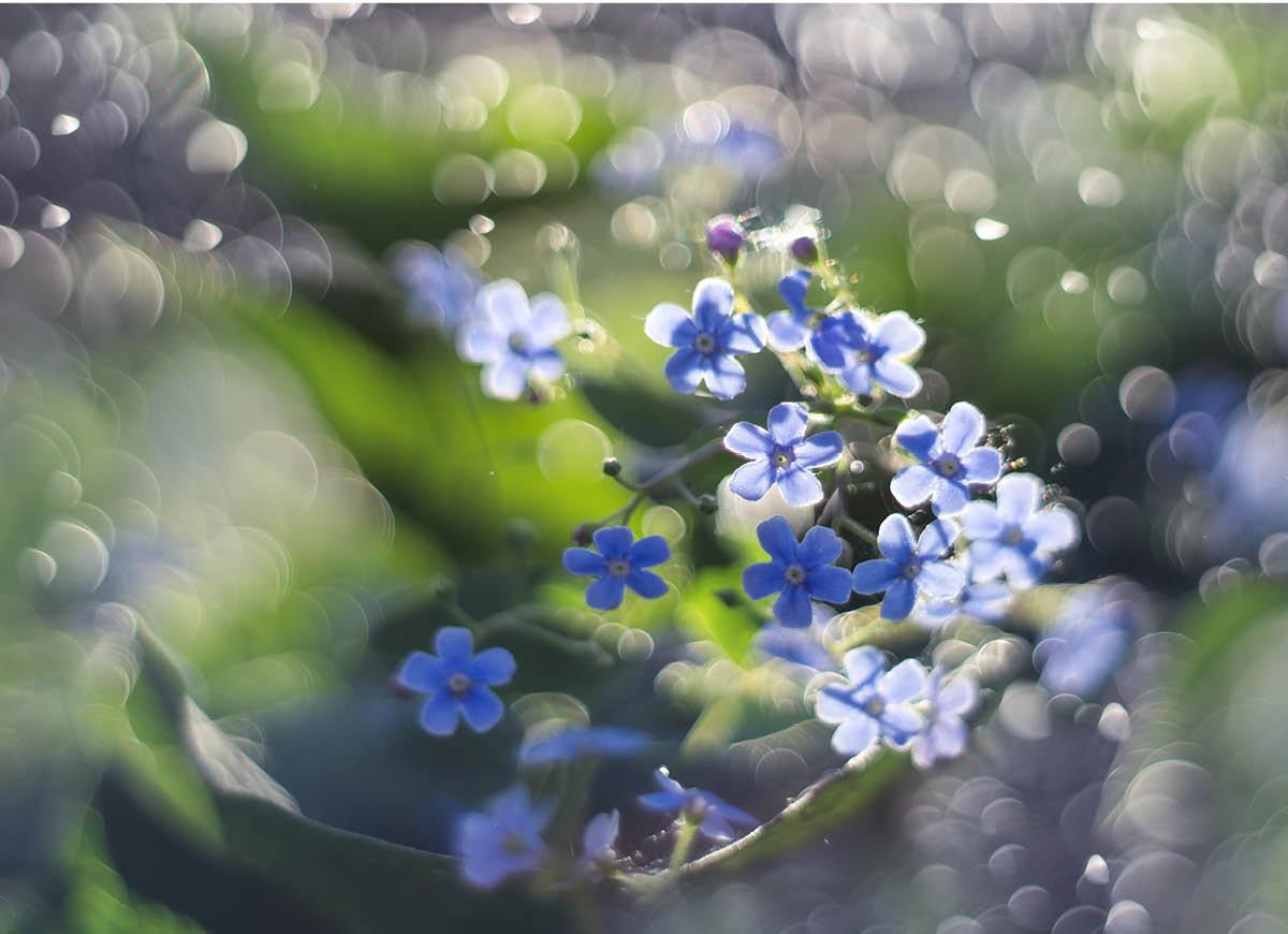Vårlängtan i  Erikshus