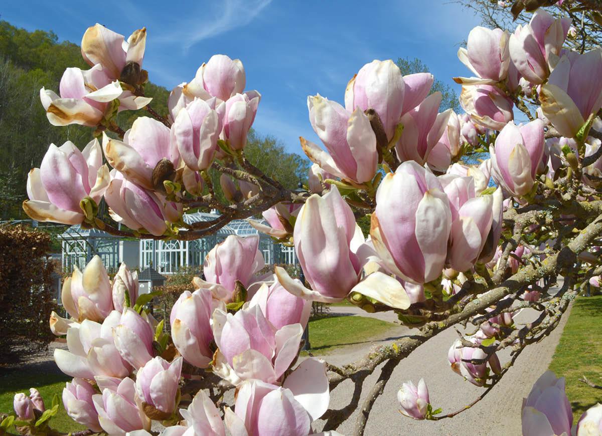 Magnoliapaketet